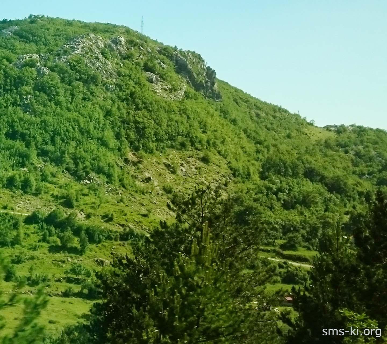 Обої - Ліс на горі