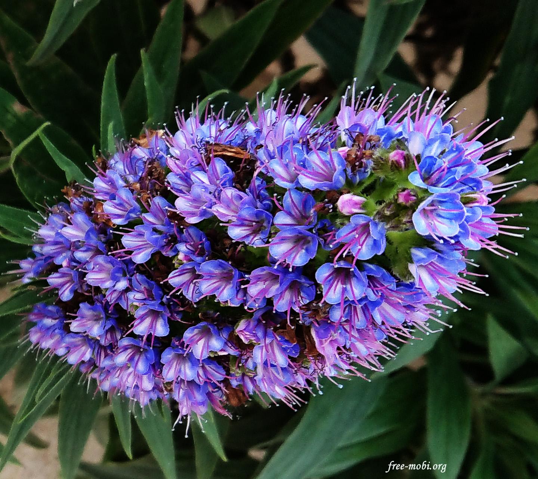 Обои - Пушистые цветочки