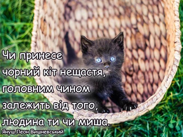 Листівка - Про чорного кота