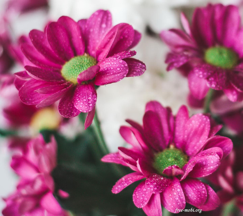 Обои - Flowers and drops