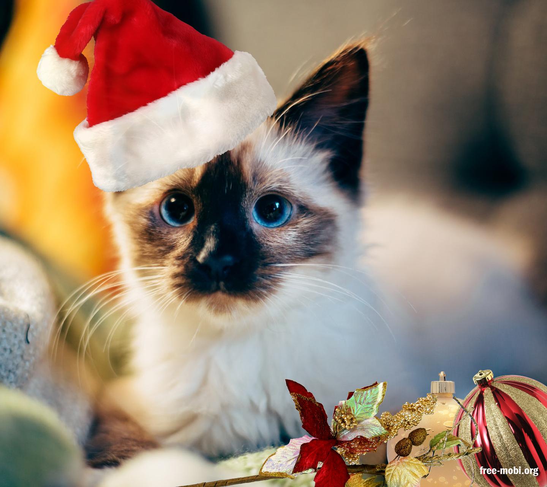Обои - Котик Санта Клаус