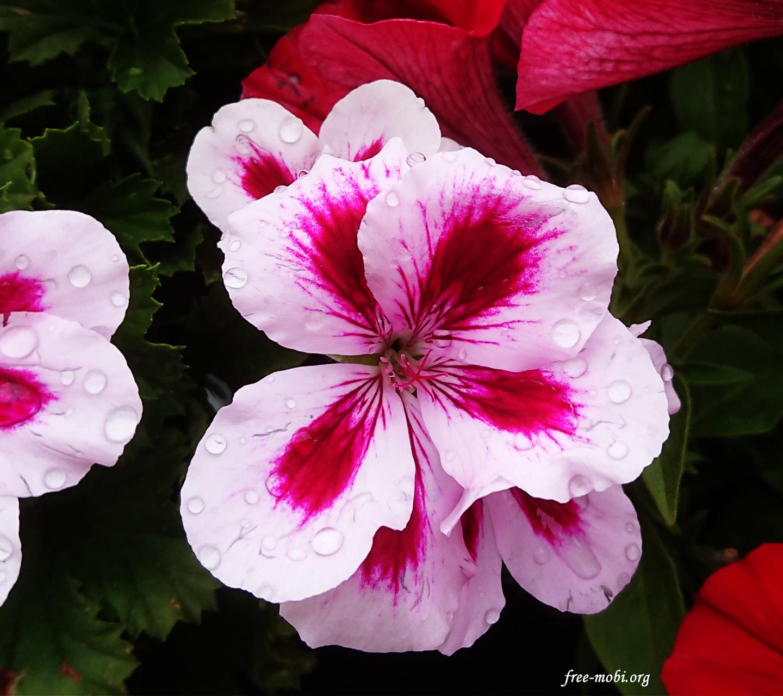 Обої - Квіти в крапельках роси