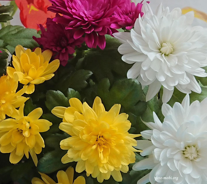 Обои - Осенние цветы