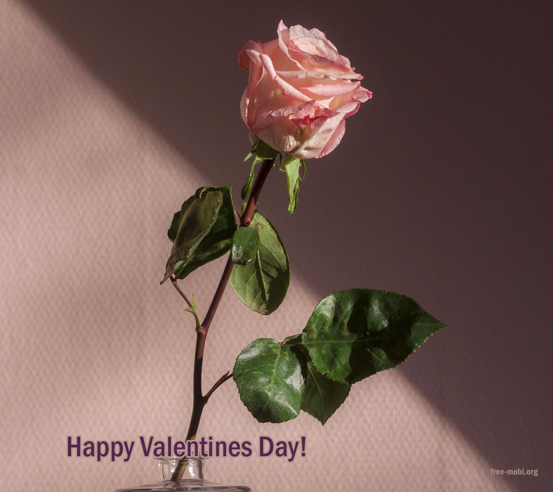 Обои - Праздник день св Валентина
