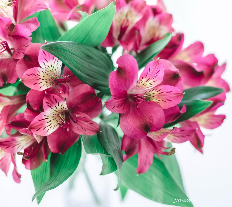 Обои - Красивые цветы