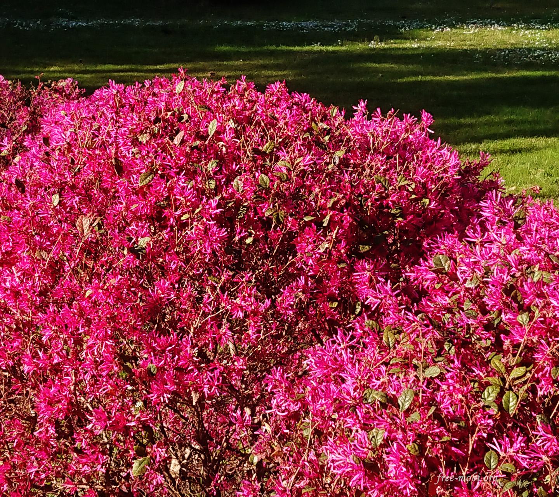 Обои - Мелкие розовые цветы