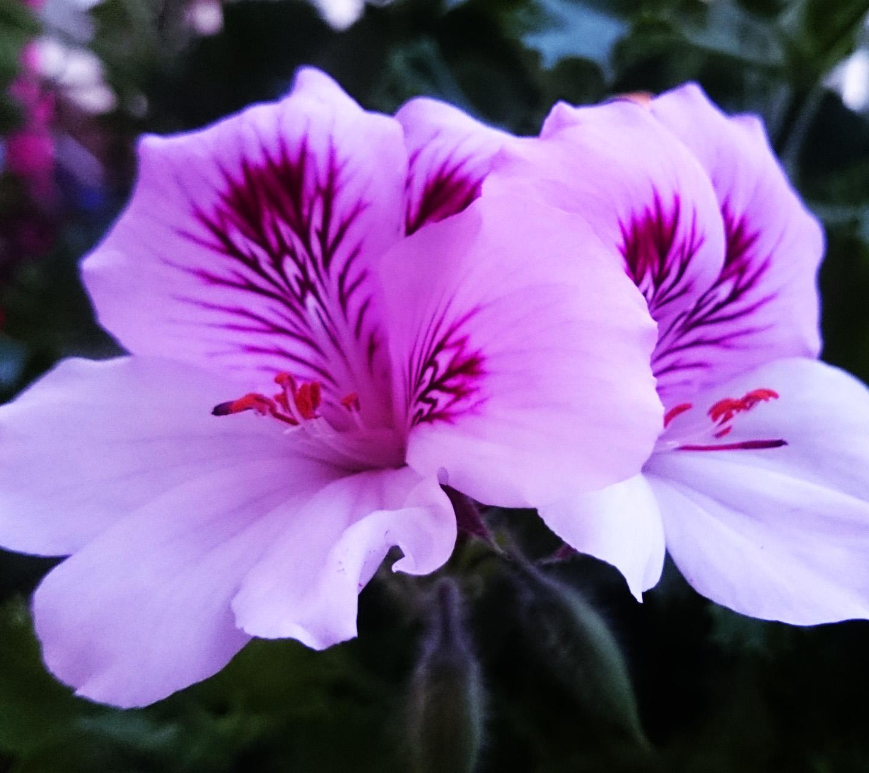 Обои - Цветочки