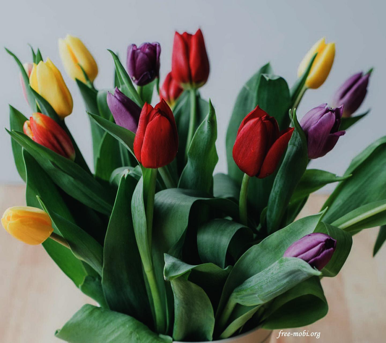 Обои - Букет тюльпанов