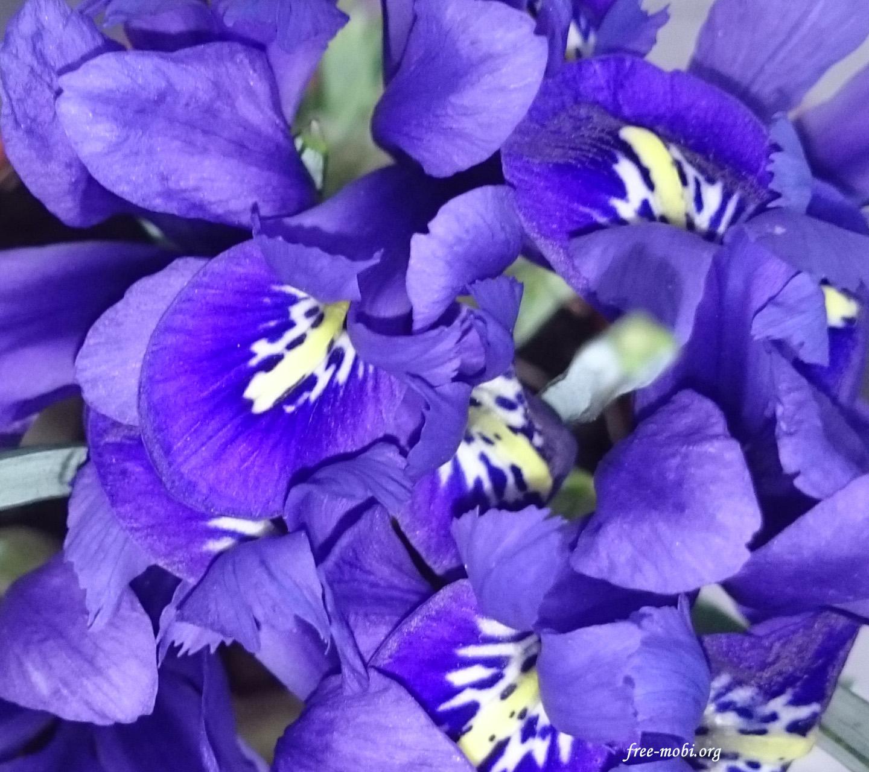Обои - Фиолетовые цветочки