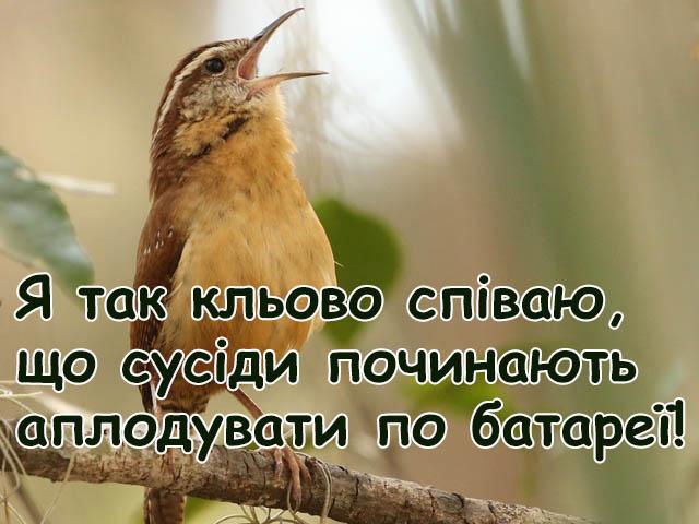 Листівки - Я співаю