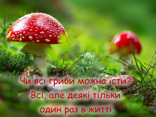Листівка - Прикол про гриби