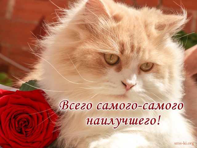 Открытка - Всего самого наилучшего открытка с котом и розой