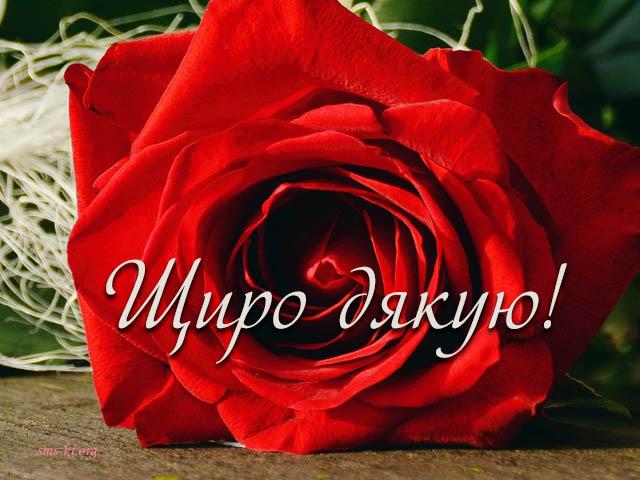 Листівка - Щиро дякую листівка з трояндою