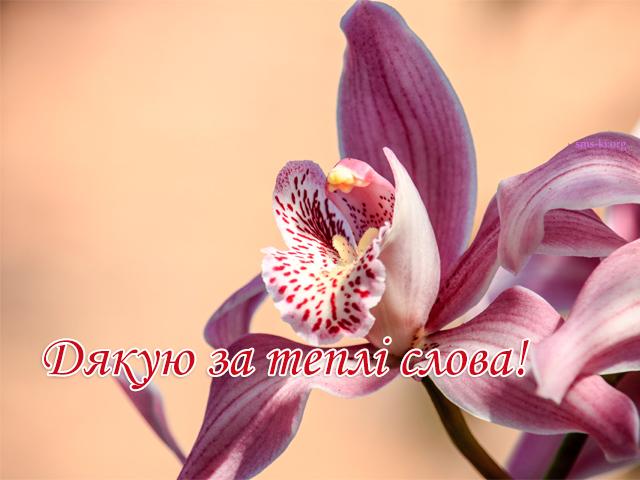 Листівка - Дякую за теплі слова картинка з орхідеєю