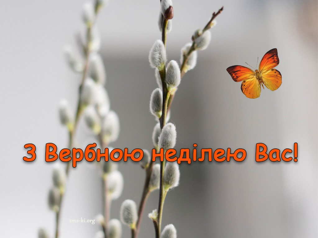 Листівка - З Вебною неділею картинка з котиками та метеликом