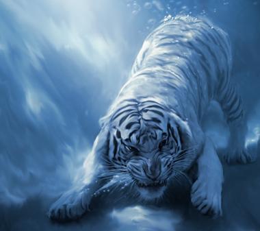 Обои на рабочий стол - Белый тигр