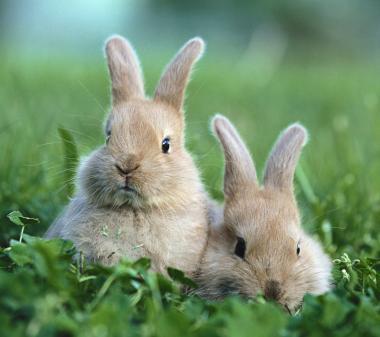 Кролики в траве mini