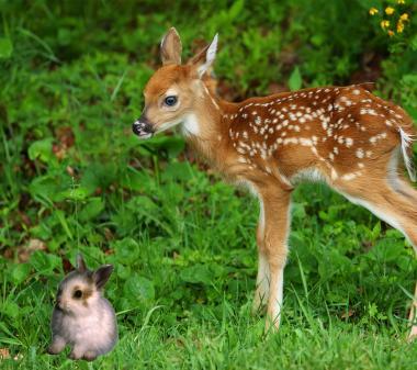 Bambi and Thumper mini