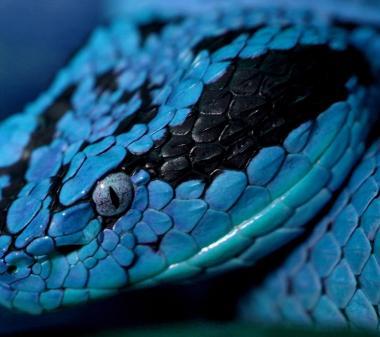 Голубая змея mini