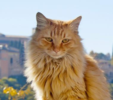 Большой рыжый кот mini