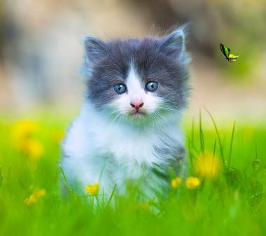 Котенок и бабочка mini