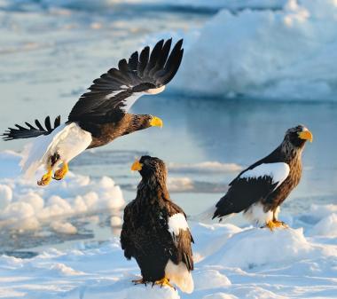 Птици на льду mini