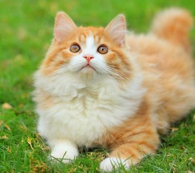 Рыжий котик на траве mini