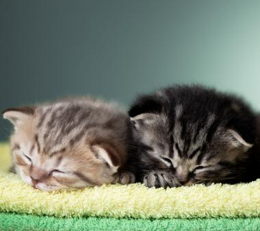 Открытка Спящие котята