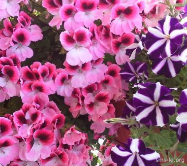 Открытка Лето любят цветы