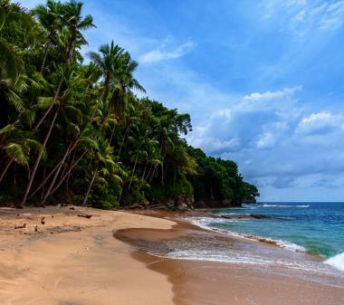 Море пальми пляж Панама mini