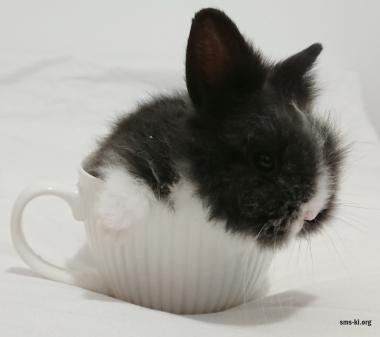 Маленький черненький зайчик mini