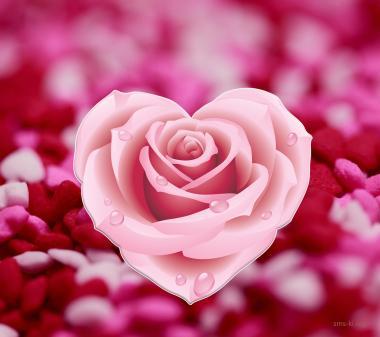 Открытка Розовая роза сердце