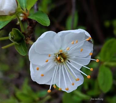 Открытка Белый цветок