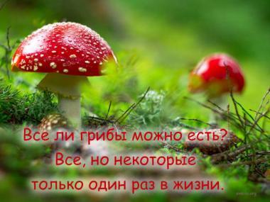 Открытка Прикол про грибы