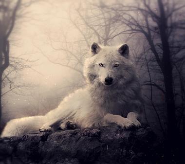 Белый волк mini