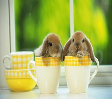 Кролики в чашках mini