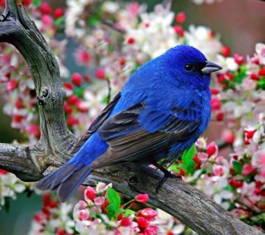 Голубая птичка mini