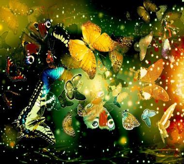 Много бабочек mini