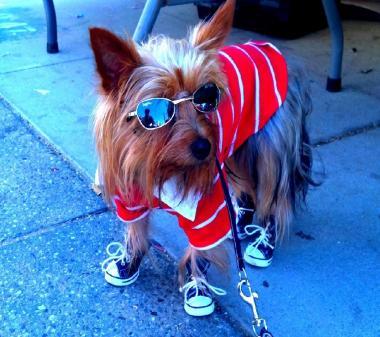 Стильная собака mini